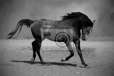 Galoppierende schwarze Pferd