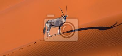 Poster Gemsbok or gemsbuck (Oryx gazella), Namib Desert, Namibia, Africa