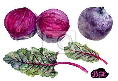 Poster Gemüse-Aquarell
