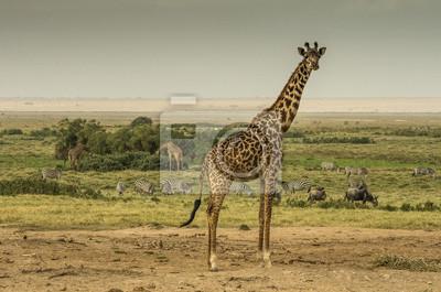 Giraffa, zebre e nella Gnu savana