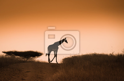 Giraffe auf dem goldenen Sonnenuntergang Himmel