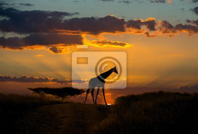 Giraffe in nebligen afrikanischen roten Sonnenuntergang