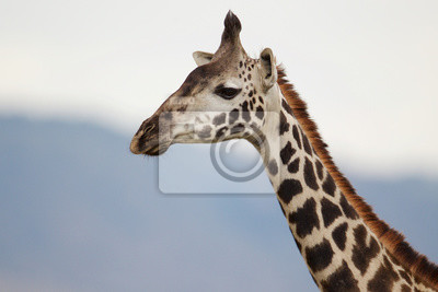 Giraffe Profil