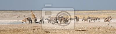 Giraffe, Springbock, Oryx und Zebras