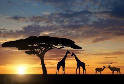 Poster Giraffen mit Kudu bei Sonnenuntergang