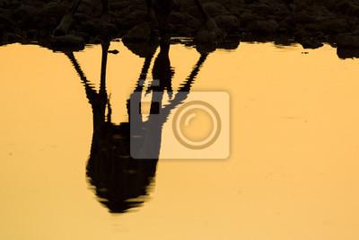 Giraffenreflexion an einem Wasserloch