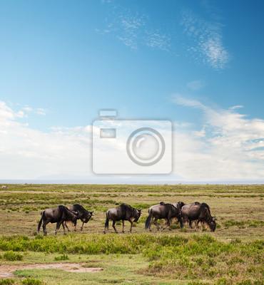 Gnu, Gnu auf afrikanischen Savanne. Safari in der Serengeti