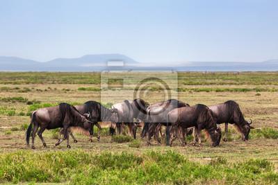 Gnus Herde, Gnu auf der afrikanischen Savanne