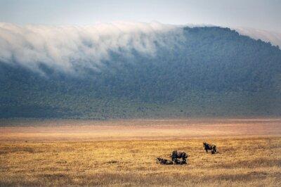 Gnus roaming inside the Ngorongoro crater in Tanzania, Africa