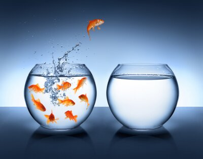 Poster Goldfisch, springen - Verbesserung und Karriere-Konzept