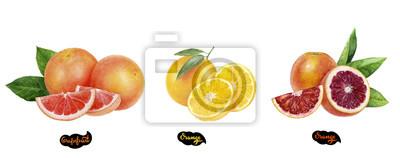 Poster Grapefruit, orange, blood orange set watercolor hand drawn illustration.