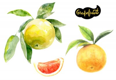 Poster grapefruit watercolor hand drawn illustration isolated on white
