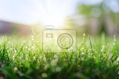 Poster Gras Feld in sonnigen Morgen