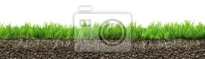 Poster Gras mit Wurzeln und Boden