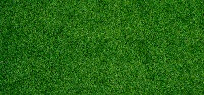 Poster grass field background, green grass, green background