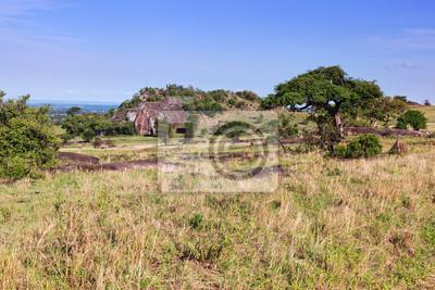 Grassavanne, Busch in Afrika. Tsavo West, Kenia.