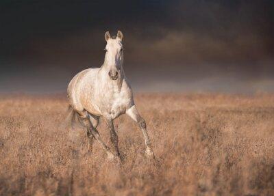 Poster Graues Pferd laufen