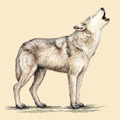 Poster Gravieren Sie Wolfabbildung