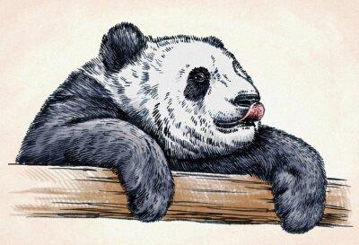 Poster Gravieren tinte zeichnen panda illustration