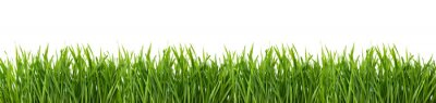 Poster Green grass isolated on white background.
