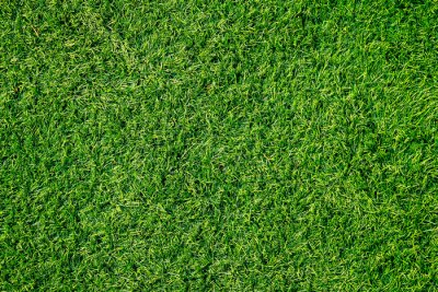 Poster Green grass texture can be use as background