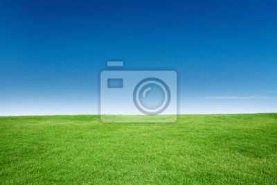 Poster Green Grass Texture with Blang Copyspace Against Blue Sky