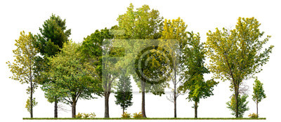 Poster Green trees isolated on white background. Forest and foliage in summer