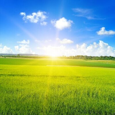 Poster Green wheat field, sun rise and blue sky. Agricultural landscape.