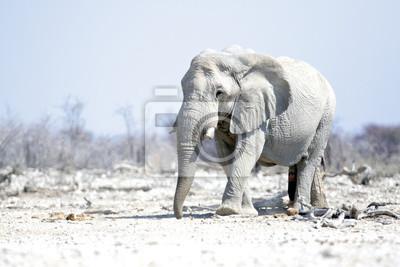 Große Elefantenbulli im Etosha Nationalpark.