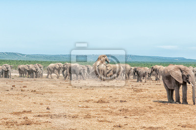 Große Elefantenherde