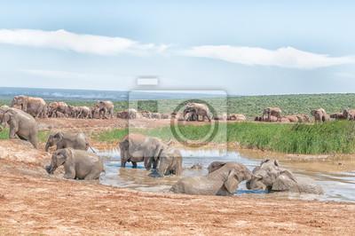 Große Gruppe von Elefanten