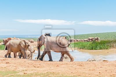 Große Gruppe von Schlamm farbigen Elefanten