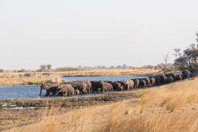 Große Herde von Elefanten im Fluss trinken