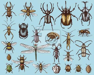 Grosse Reihe Von Insekten Bugs Kafer Und Bienen Viele Arten In