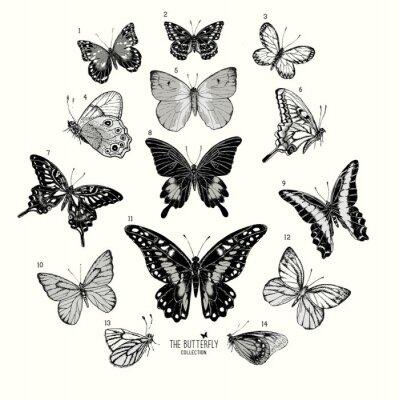 Poster Große Sammlung von Schmetterlingen, von Hand gezeichnet Satz isolated.Vector illustration