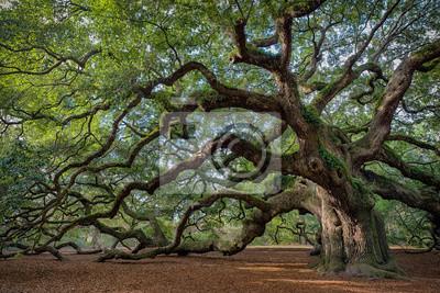 Poster Große südliche lebende Eiche (Quercus virginiana) in der Nähe von Charleston, South Carolina