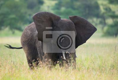 Großer Elefant auf afrikanischer Savanne
