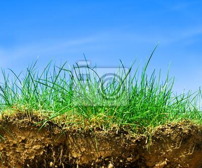 Ground, Gras, Himmel Querschnitt