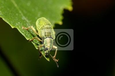 Grüne Blattkäfer hängen aus