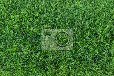 Poster grüne Gras Textur