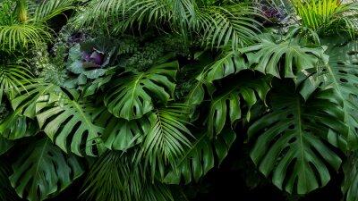Poster Grüne tropische Blätter von Monstera, Farn und Palmwedeln die Blumenanordnung des Regenwaldlaubpflanzenbusches auf dunklem Hintergrund, natürlicher Blattbeschaffenheit-Naturhintergrund.