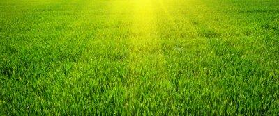 Poster Grüner Rasen für Hintergrund