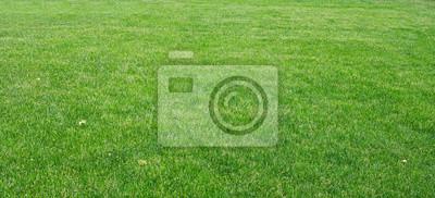 Poster Grünes Gras