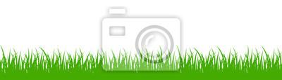 Poster Grünes Gras auf weißem Hintergrund - Vektor
