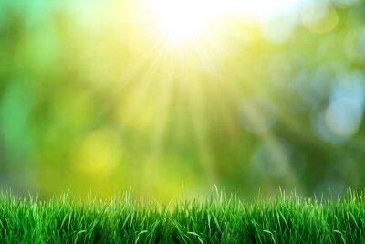 Poster Grünes Gras mit Blick auf den Sonnenuntergang.