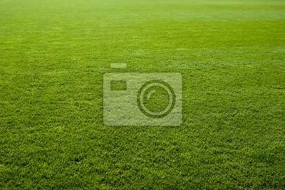 Poster Grünes Gras Textur eines Fußballfeldes .