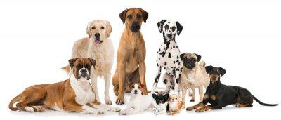 Poster Gruppe von Hunde - Gruppe von Hunden