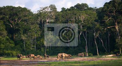 Gruppe von Wald Elefanten in den Waldrand. Republik Kongo. Dzanga-Sangha Spezialreservat. Zentralafrikanische Republik. Eine ausgezeichnete Illustration.