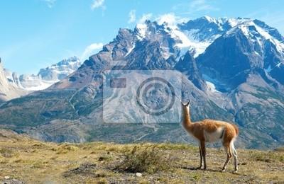 Guanako im Torres del Paine Nationalpark bewundern die Berge