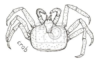 Hand gezeichnete Skizze Grafiken Krabbe mit Beschriftung isoliert auf weiß